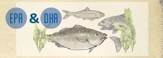 Bienfaits des oméga-3 EPA & DHA
