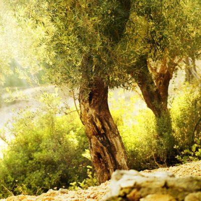 Huile d'olive Norsan Omega 3 Vegan liquide