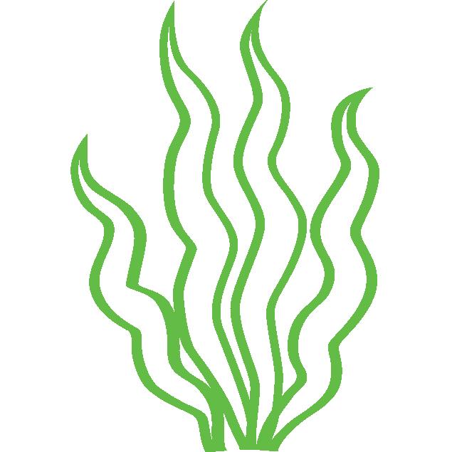 Huile d'algues oméga 3